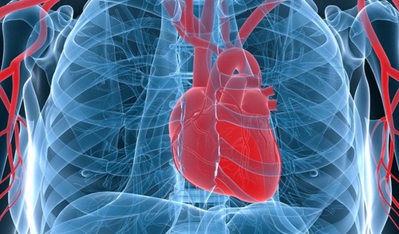 сердце в груди