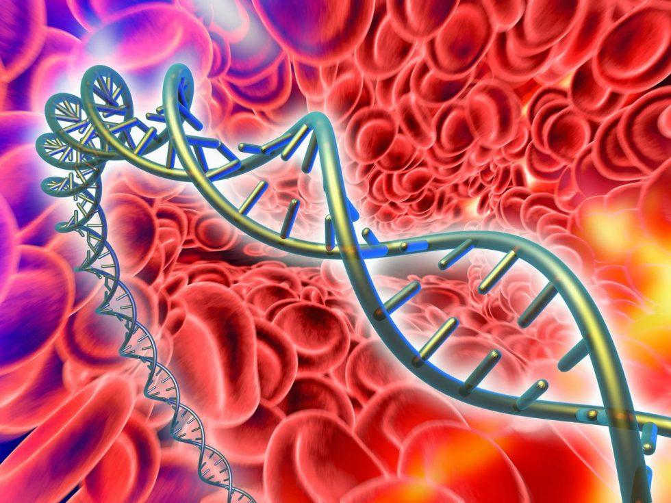 Гемофилия - ген