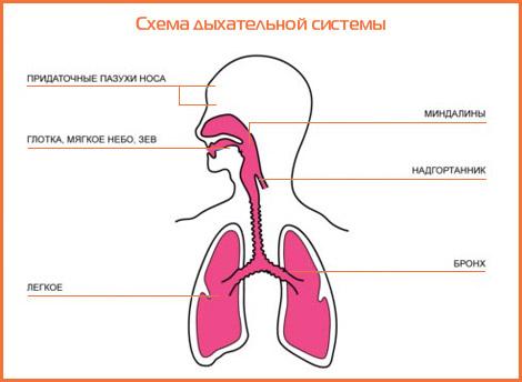Катар дыхательных путей острый у детей
