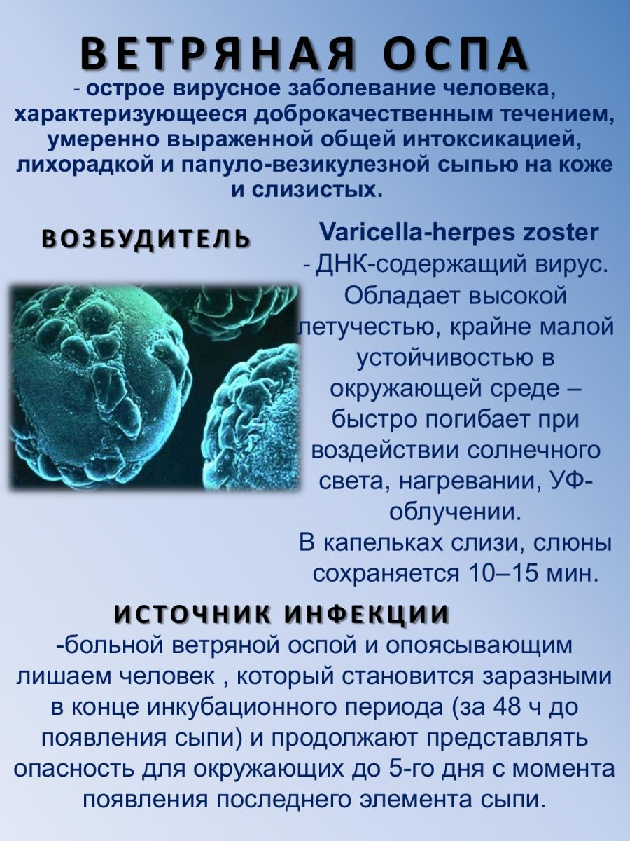 Реферат на тему вирус ветряной оспы 2748